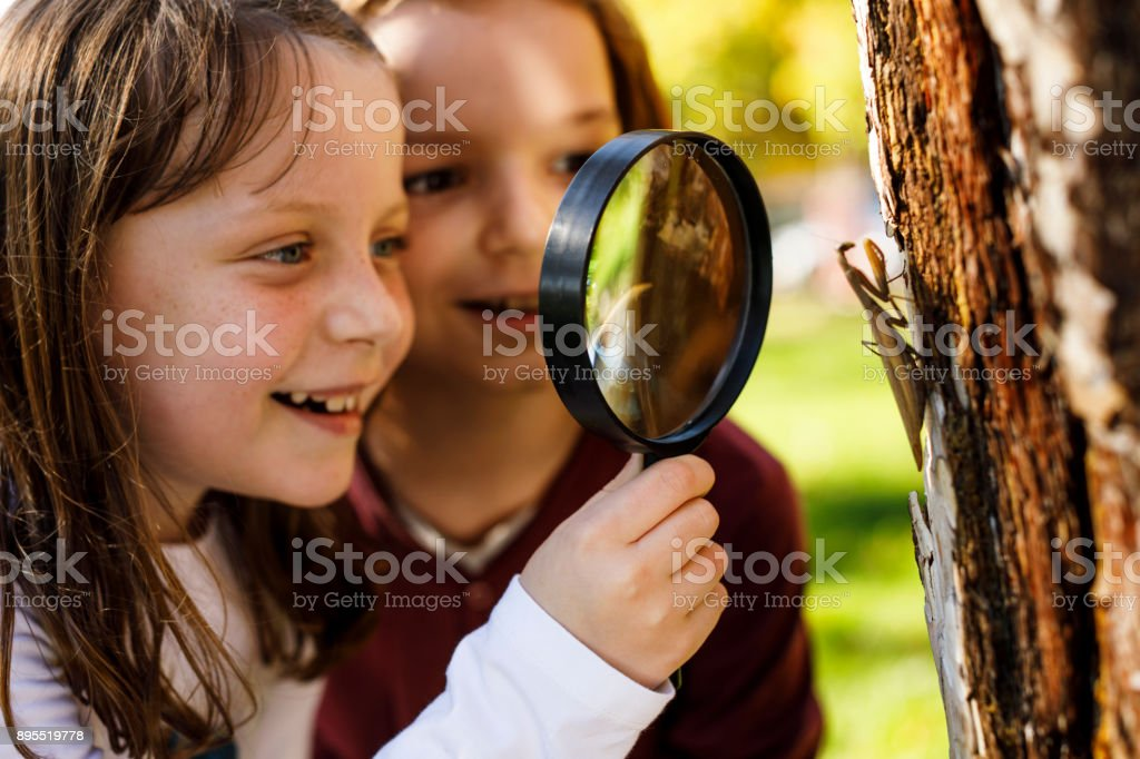 School children exploring insects stock photo
