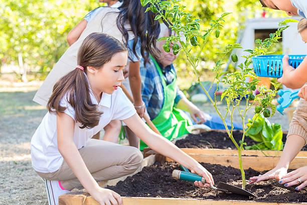 escola crianças plantação produtos hortícolas no jardim durante a viagem de campo da exploração - teacher school solo imagens e fotografias de stock
