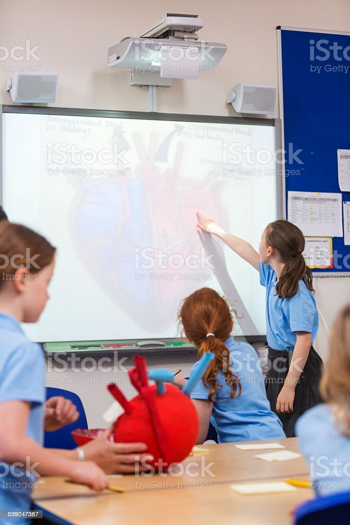 School Children Studying The Heart stock photo
