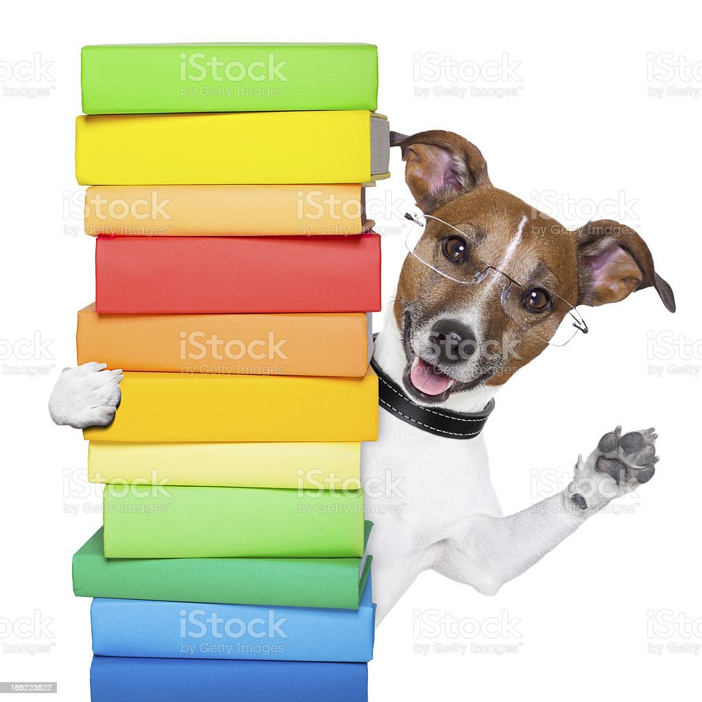 school dog royalty-free stock photo