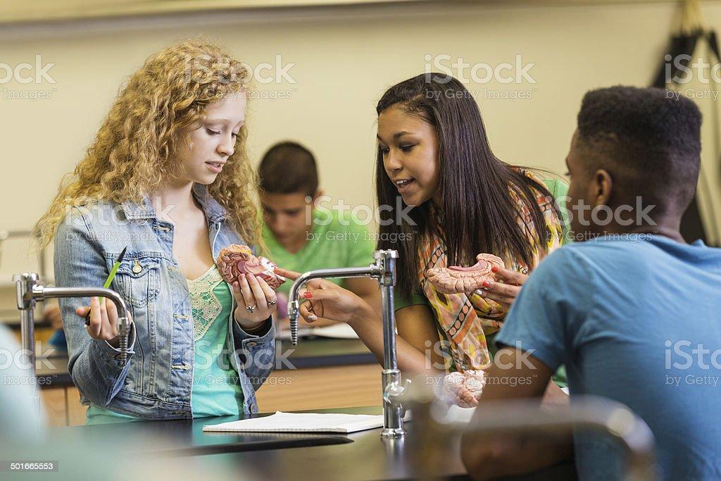 School girls examining brain model educational toy in science class stock photo