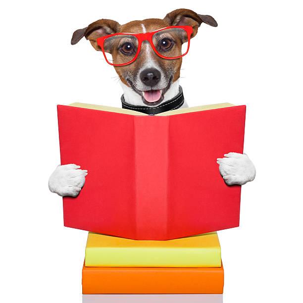 schule amp \;; hunde - humor bücher stock-fotos und bilder