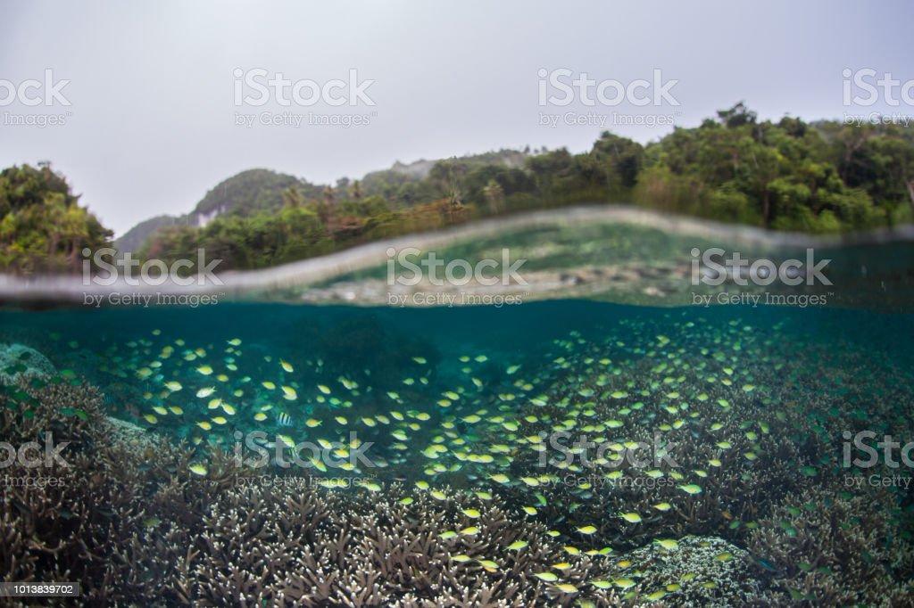 Escuela de peces en aguas poco profundas de Raja Ampat - foto de stock