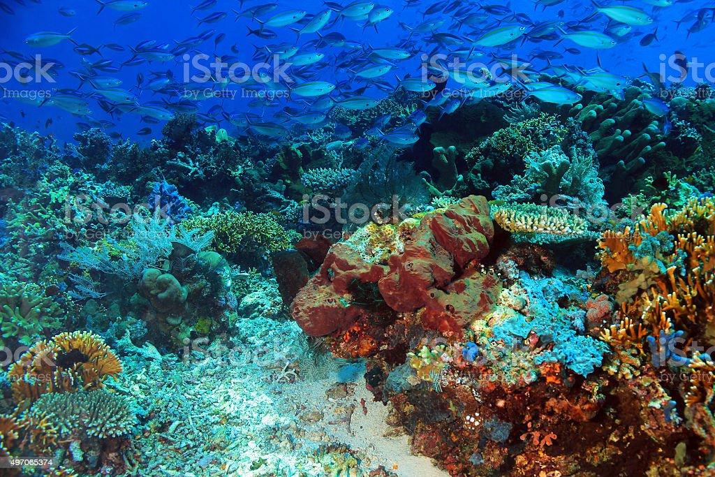 School of Fish over Coral Reef bildbanksfoto