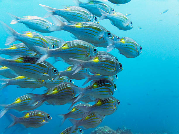 Royalty free school of fish pictures images and stock for School of fish