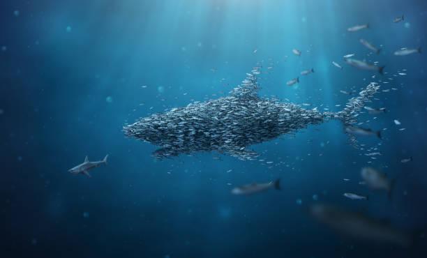 school of fish stronger together teamwork - squalo foto e immagini stock