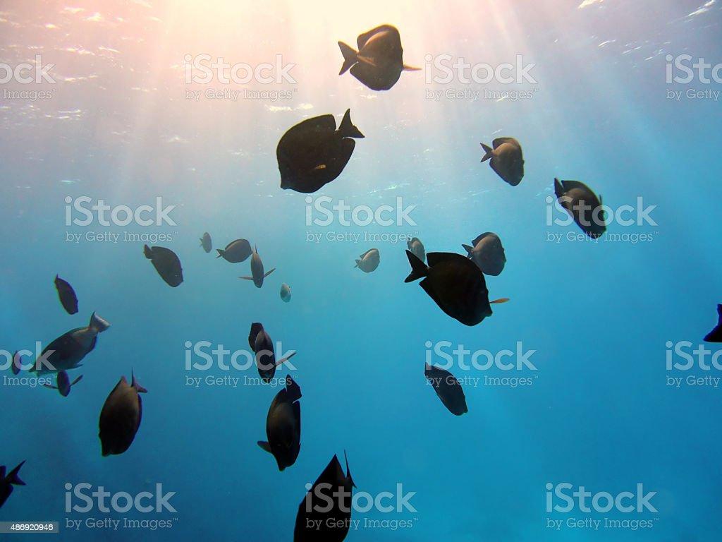School Of Fish Underwater in sunlight stock photo