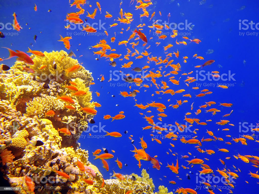 School Of Fish Underwater stock photo