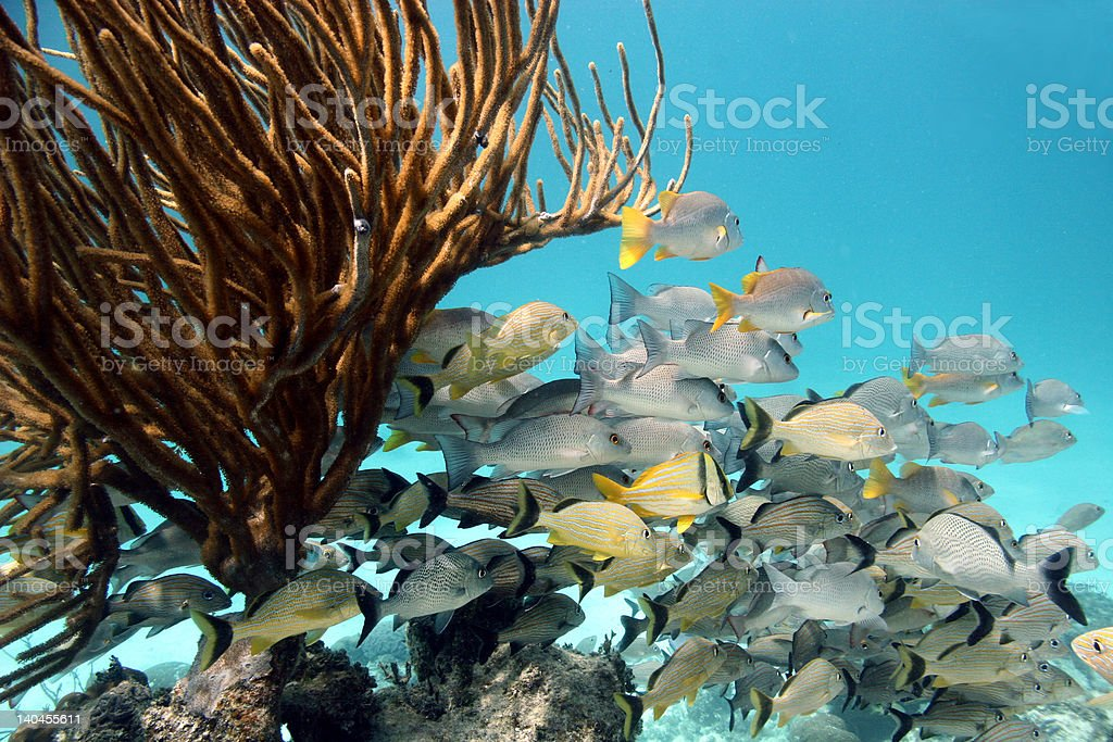 School of Fish with Coral stock photo