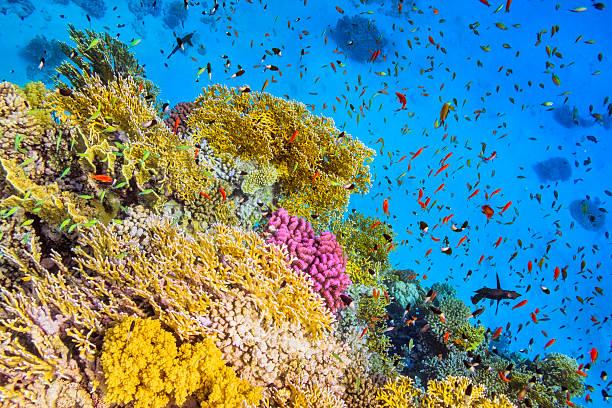 école de poissons dans goral jardin, sur la mer rouge - organisme vivant photos et images de collection