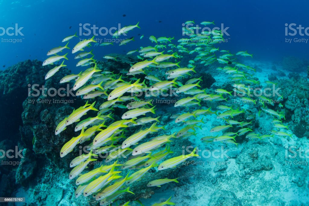 school of fishes foto stock royalty-free