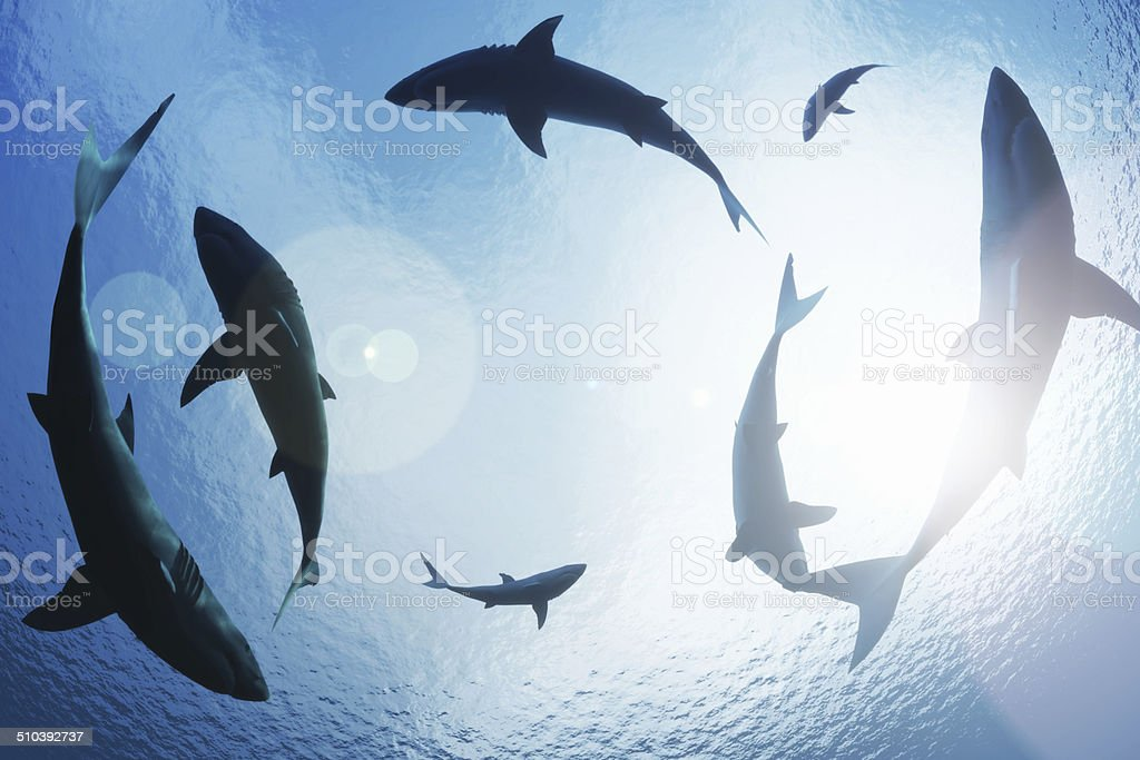 School of sharks circling from above stock photo