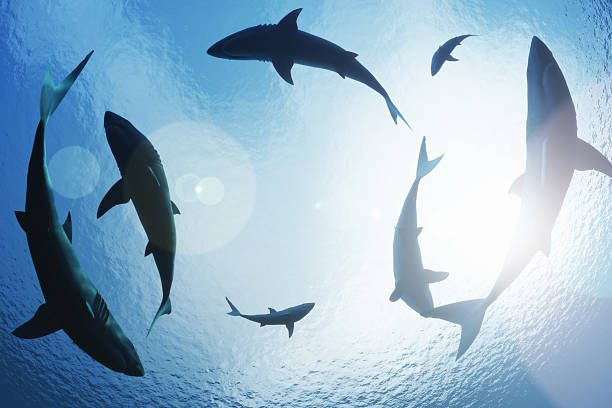 School of sharks circling from above School of sharks circling from above diving flipper stock pictures, royalty-free photos & images
