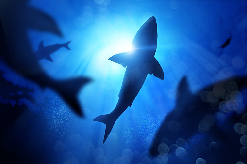 School Of Sharks Under The Waves Stock Photo - Download Image Now