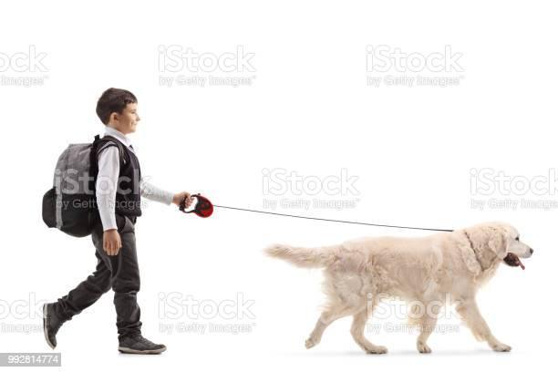 Schoolboy walking a dog picture id992814774?b=1&k=6&m=992814774&s=612x612&h= 8rmgrkskld2nauaacpmu4yizxdhrflygwpnjmixqyq=