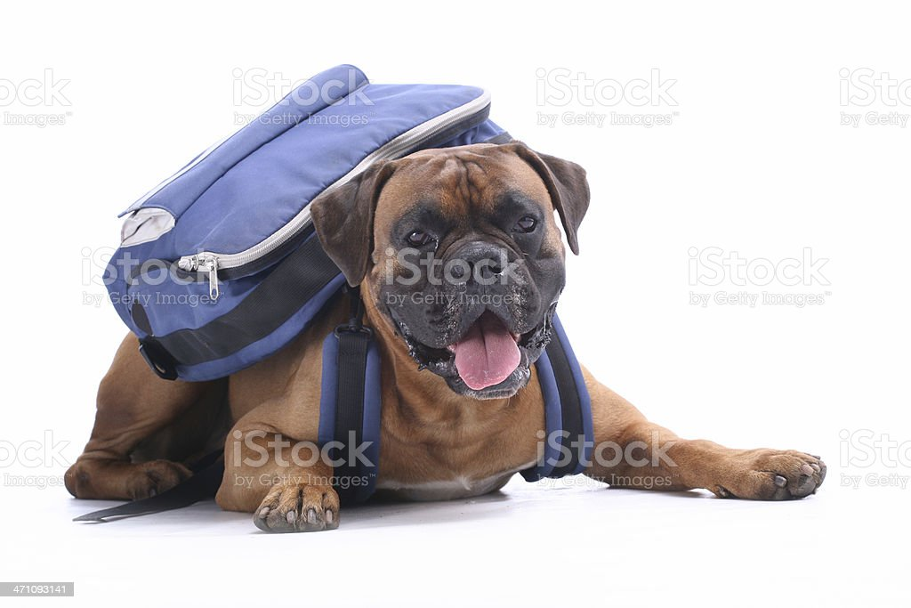 Schooldog stock photo