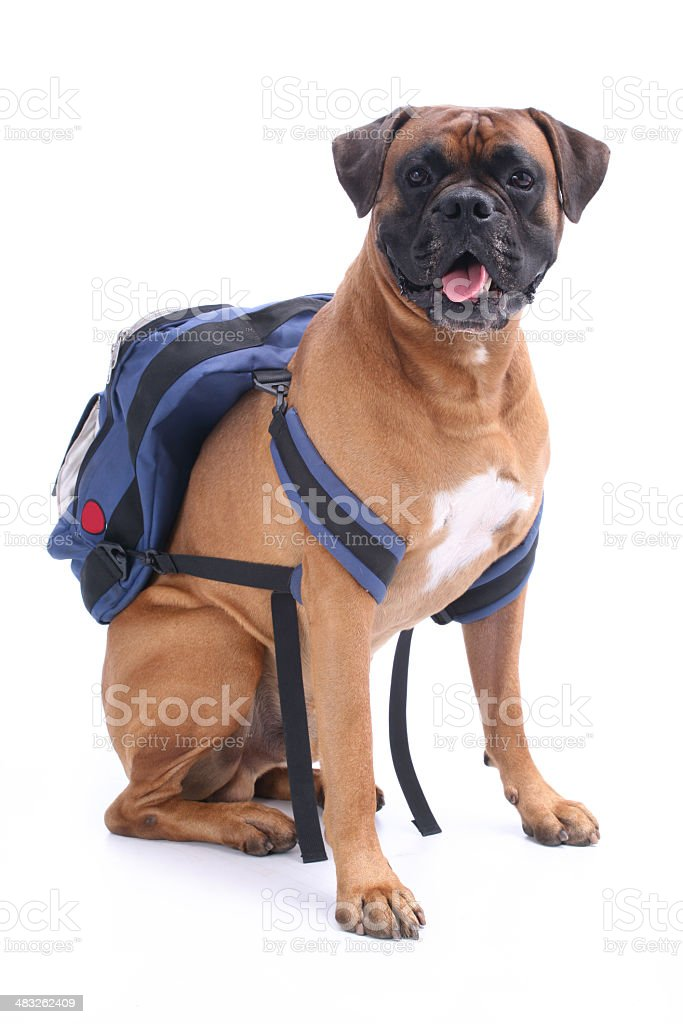 Schooldog royalty-free stock photo