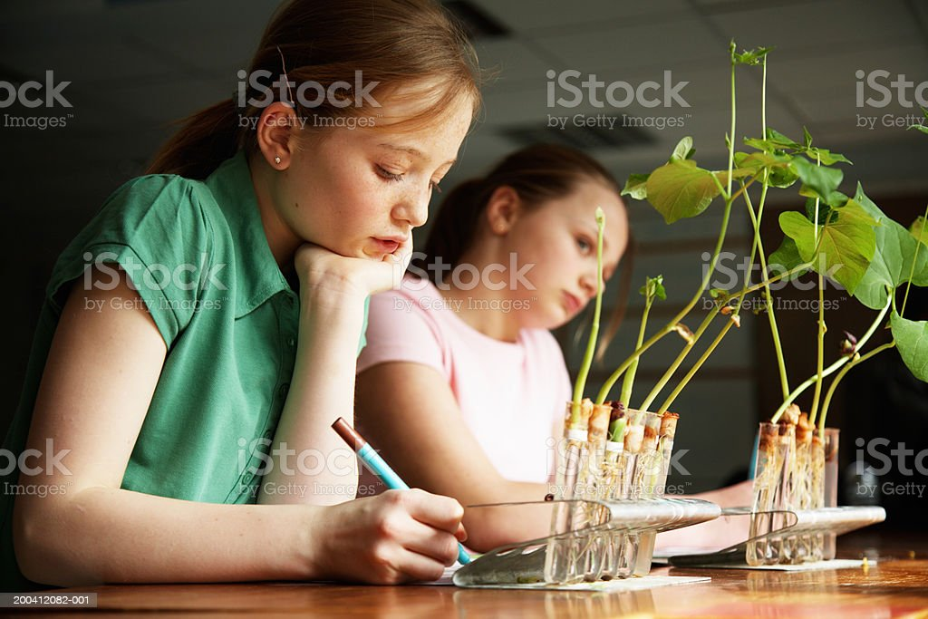 Schoolgirl (11-13) writing at desk with plants growing in test tubes stock photo