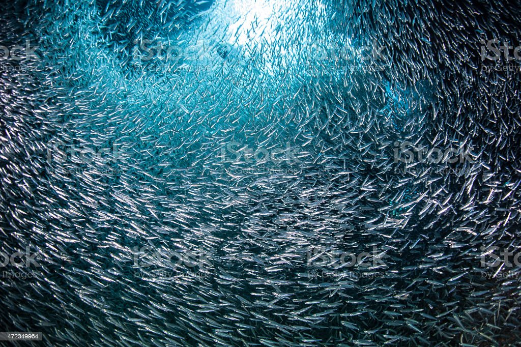 Schooling Fish in Grotto stock photo