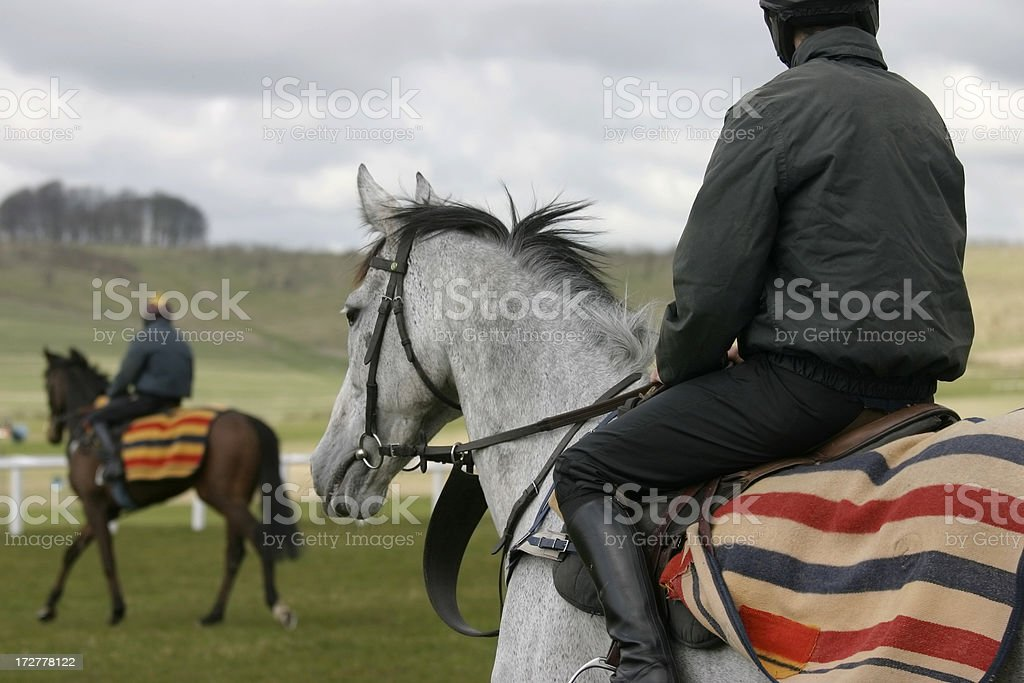 Schooling the Racehorses royalty-free stock photo