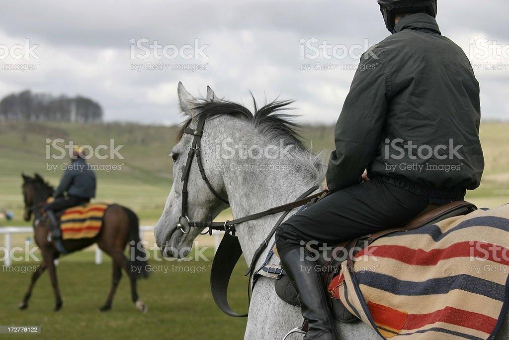 Schooling the Racehorses stock photo