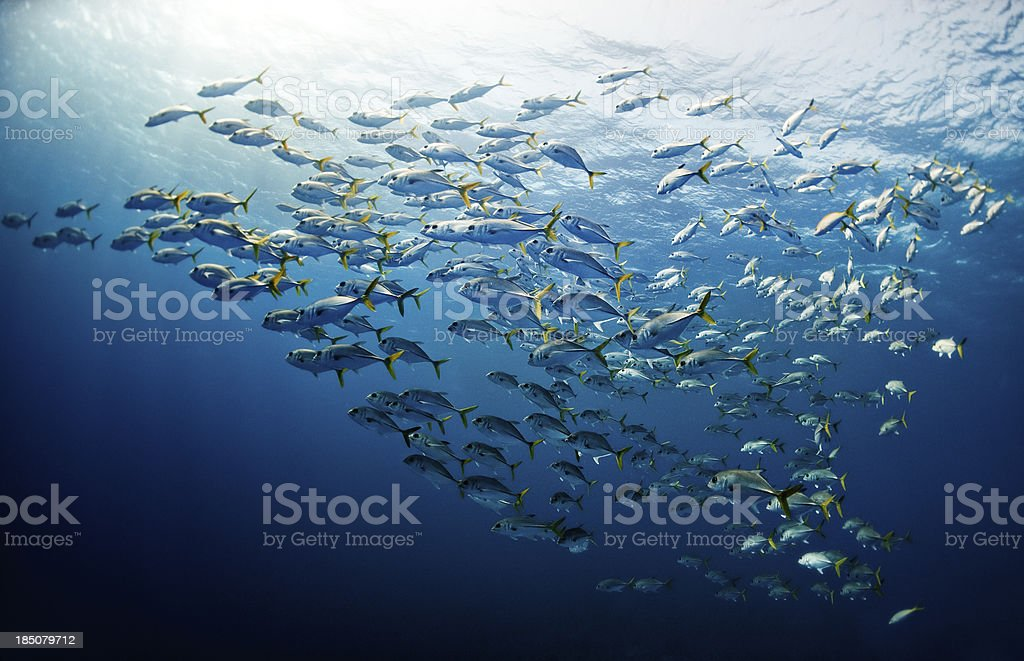 Schools Of Fishes stock photo