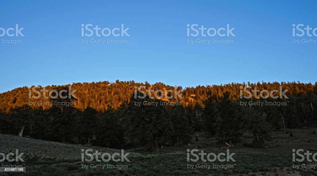 Schulman Grove Sunset stock photo