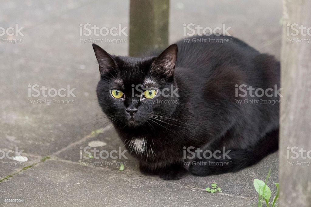 schwarze Katze stock photo