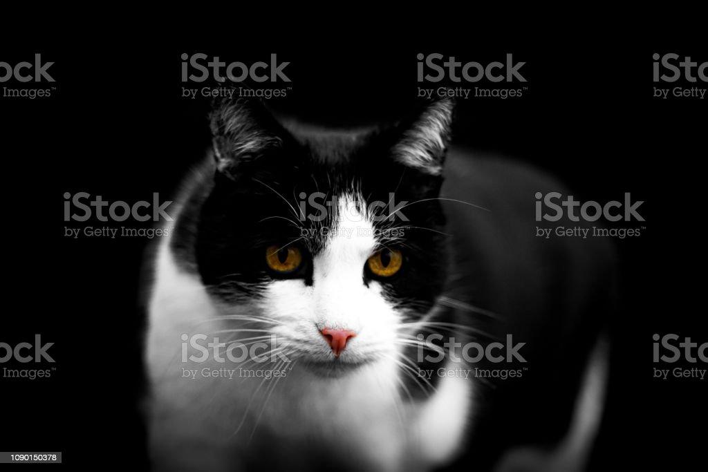 Schwarz-Weiße Katze – Foto