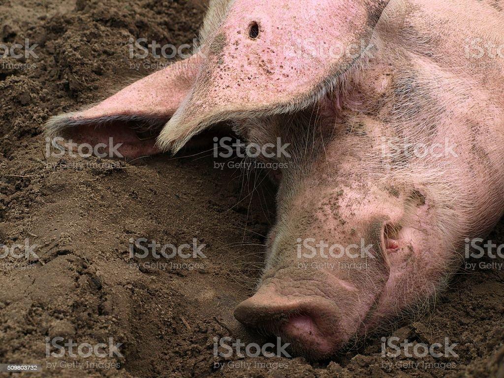 Schweinskopf – Foto