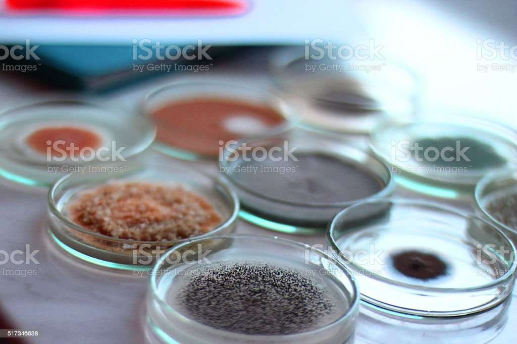 Science backgrounds-Bacteria stock photo