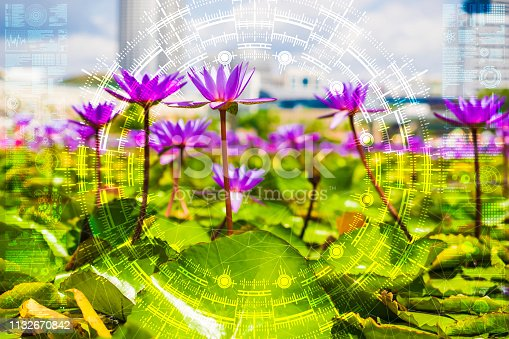 1045841966istockphoto Science flower chaotic city 1132670842