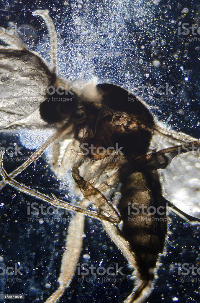science microscopy animal insect royalty-free stock photo