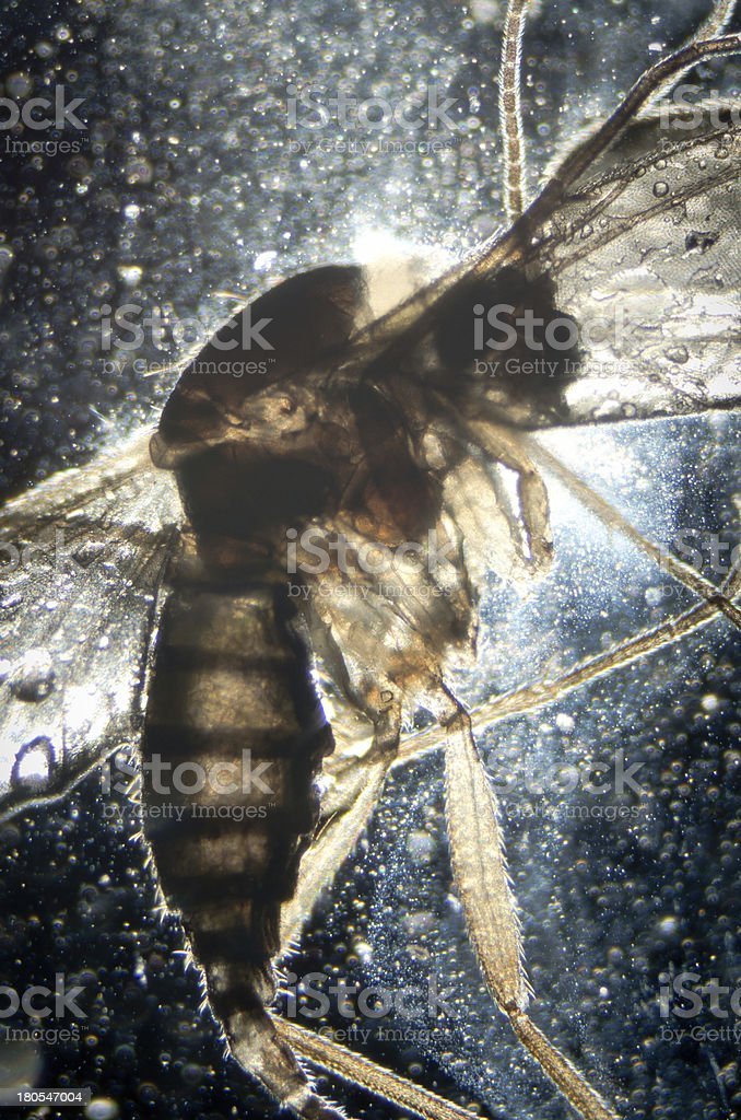 science microscopy animal insect stock photo