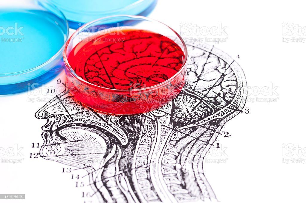 Science of the brain royalty-free stock photo