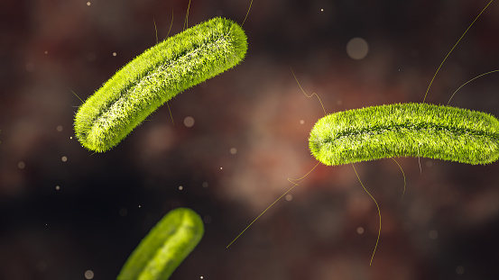 Science Photo of bacteria listeria infection is a food-borne bacterial illness that can be very serious for pregnant women, people older than 65 and people with weakened immune systems 3d rendering