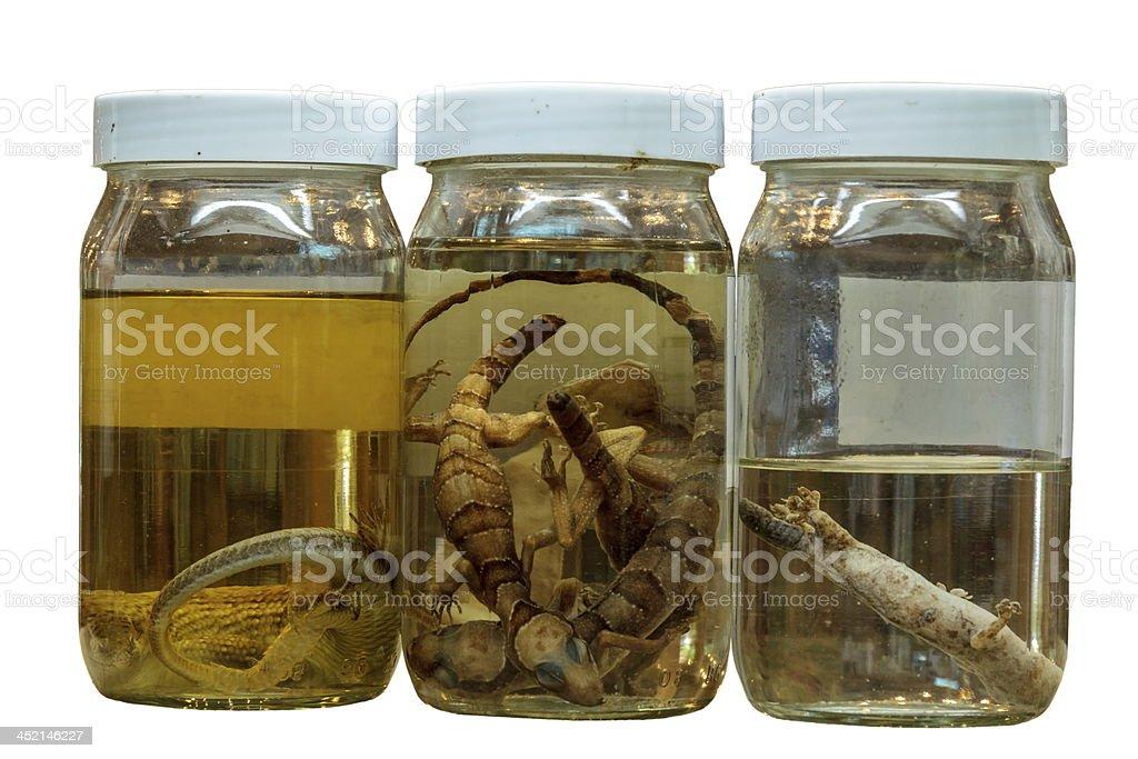 Science Specimens royalty-free stock photo