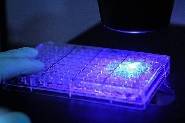 Scientific Culture Plate and Microscope stock photo