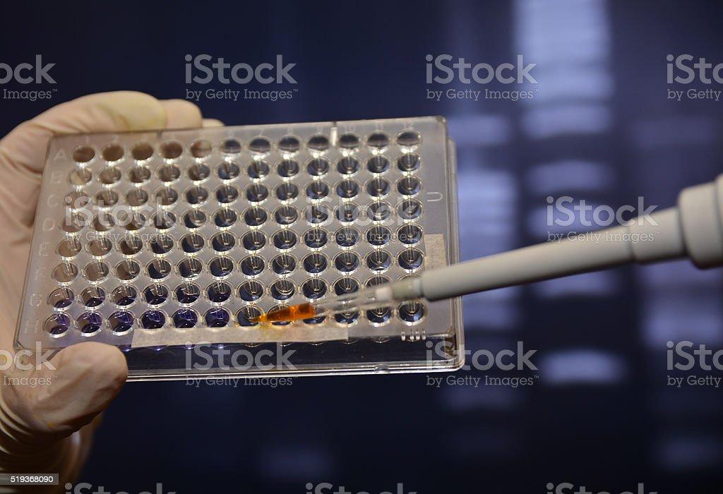 scientific experiment in the laboratory. stock photo