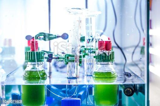 Scientific experiment in the Laboratory with green algae