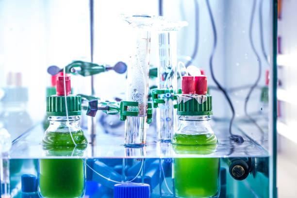 wetenschappelijk experiment in het laboratorium met groene algen - waterstof stockfoto's en -beelden