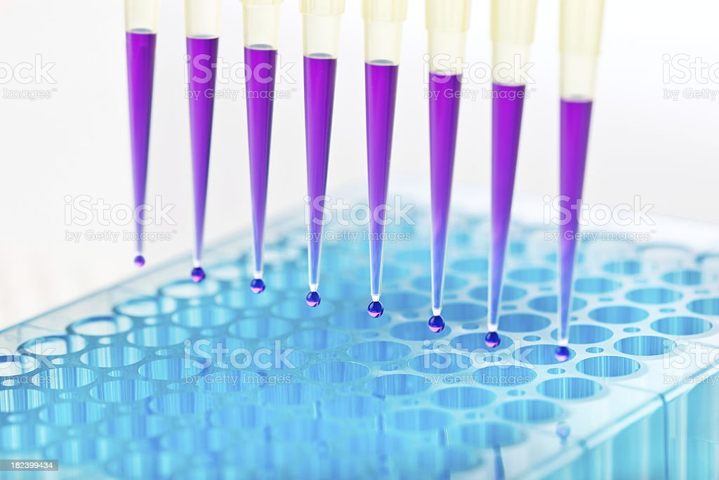 Scientific experiment royalty-free stock photo