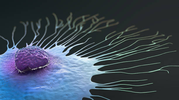 Scientific illustration of a migrating breast cancer cell - 3d illustration Scientific illustration of a migrating breast cancer cell - 3d illustration metastasis stock pictures, royalty-free photos & images