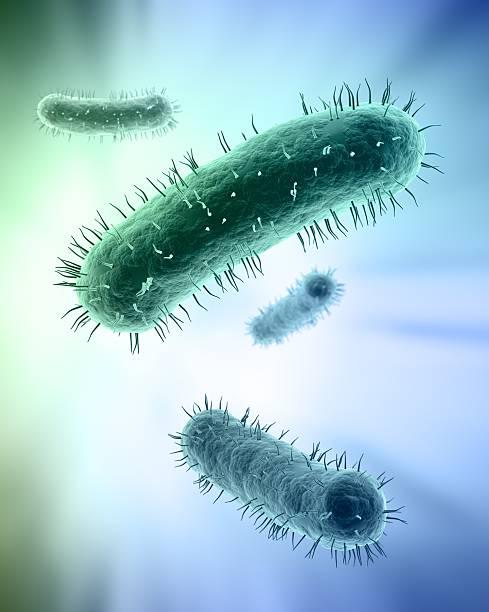 Scientific illustration of bacteria stock photo