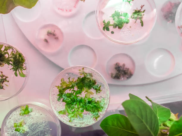Scientific research plates for the sample plant materials stock photo