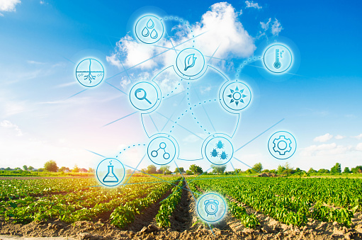 1094263056 istock photo Scientific work and selection, crop forecasting and condition analysis. Modern farming. field of vegetables on a sunny day. Fresh green greens. Innovations and developments in agriculture. 1127859828