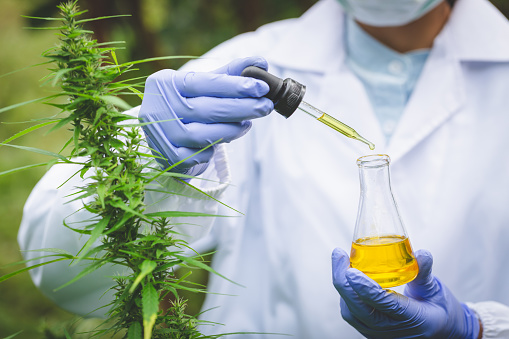 1177762728 istock photo Scientist Analyzing and researching hemp oil extracts,  Concept of herbal alternative medicine, cbd hemp oil, pharmaceptical industry. 1192840653