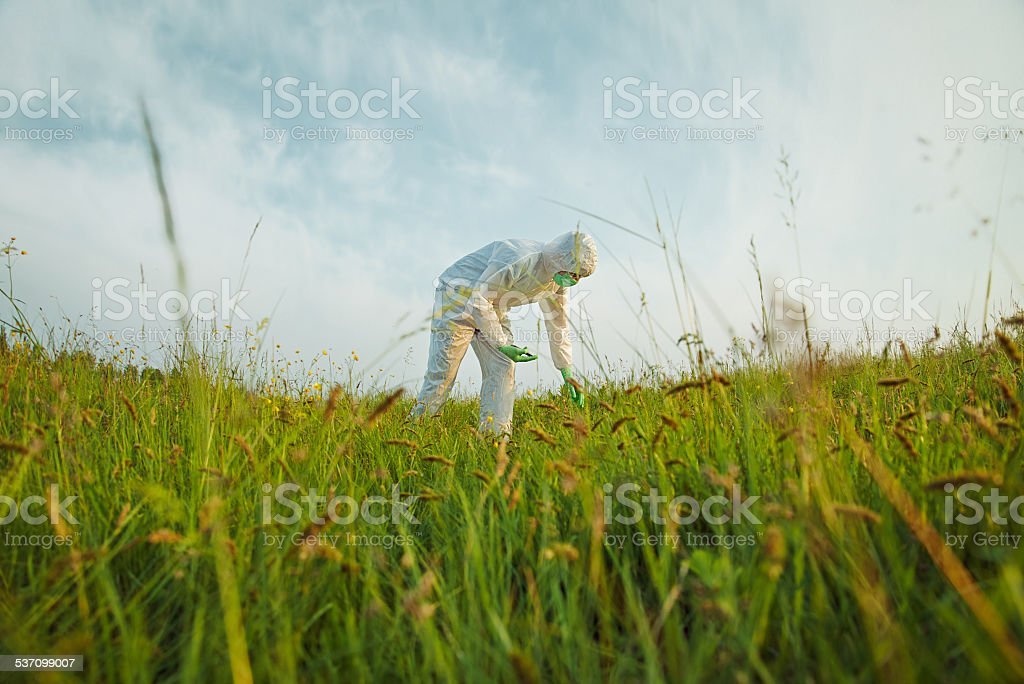Scientist analyzing green plants on summer field stock photo