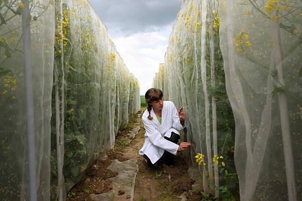 Wissenschaftler Arbeiten im Freien – Foto