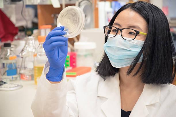 Scientist checking a petri dish stock photo